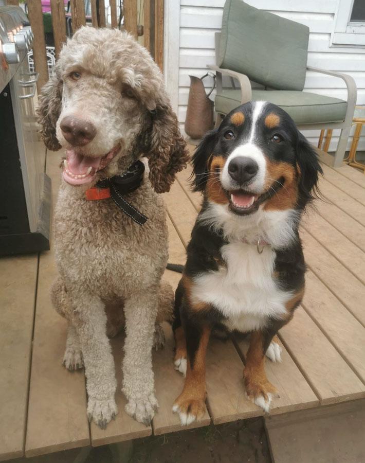 Poodle & Burnese