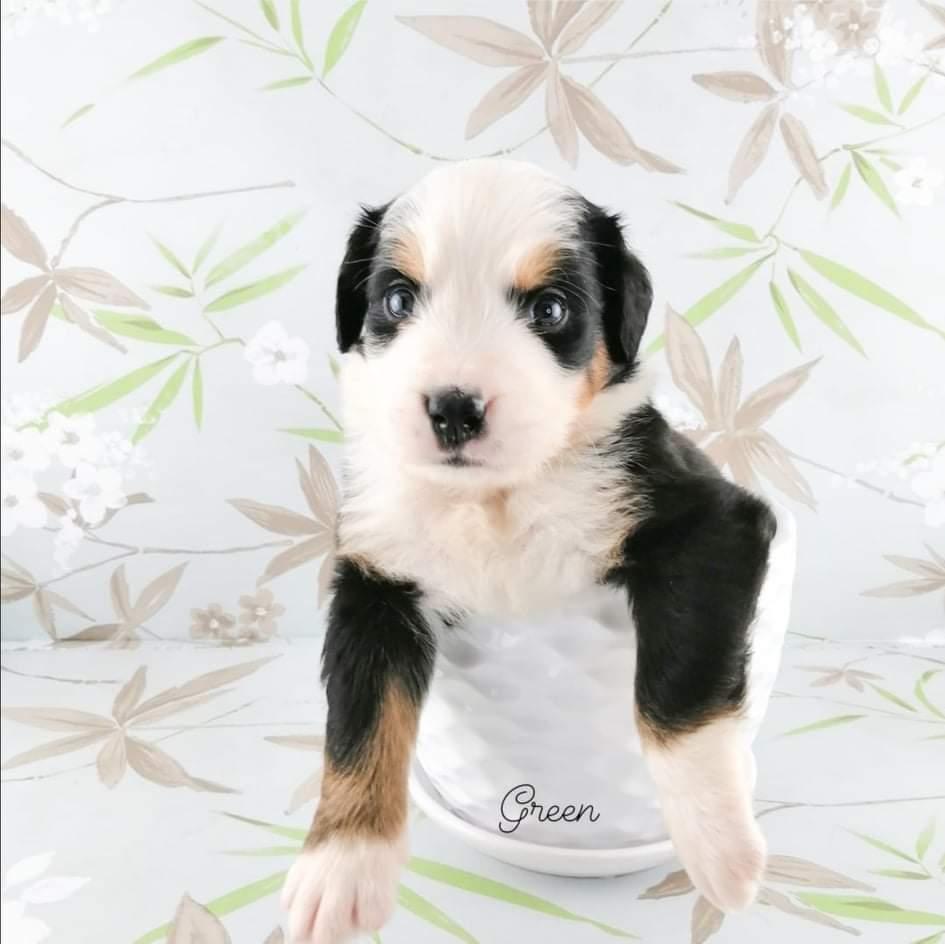 Marlie G Puppy